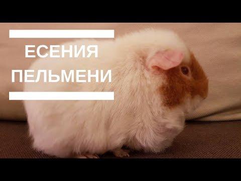Сколько раз болеют свинкой в жизни
