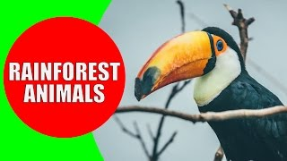 Rainforest Animals for Children - Jungle Animal Sounds and Rainforest Wildlife