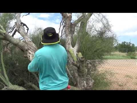 I cut the tree with my SKILL SAW I had to call 911