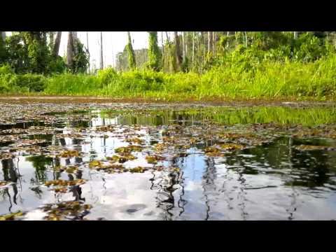 South American wilderness, swampish