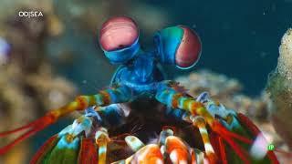 Extrañas Criaturas: EXCÉNTRICOS DEL OCÉANO - Episodio 3 - Documental Naturaleza 2018 HD 1080p