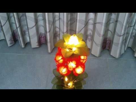 Hoa voan Lồng đèn