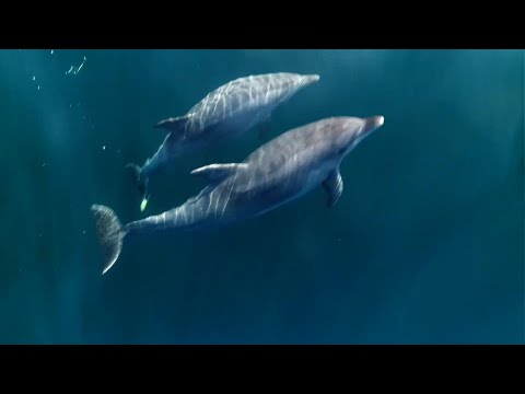 Assignment Asia: Dolphins of the Bosphorus Strait