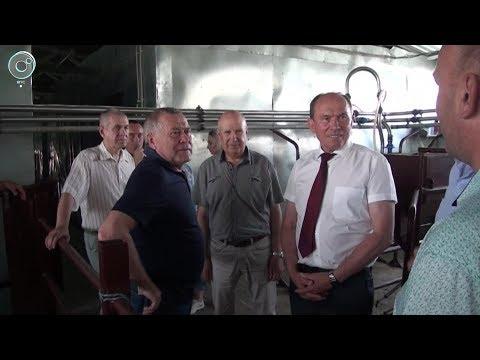 В Здвинском районе Новосибирской области вдвое увеличат объёмы производства молока