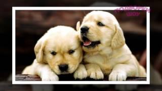 ТОП красивых ЩЕНКОВ! Лучшие фото в одном видео! Порода собак