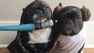 The last Cat and Dog Jedi - Funny and cute animal Star Wars compilation