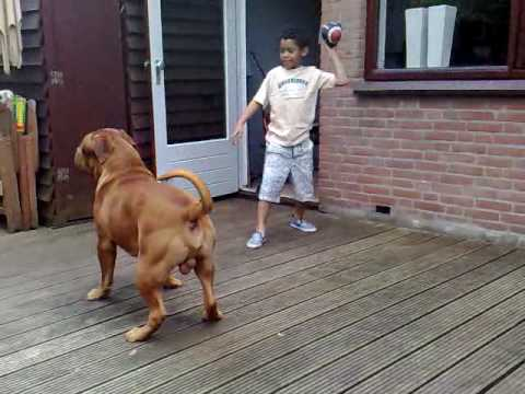 the best dog!!!!bordeauxdog Djago