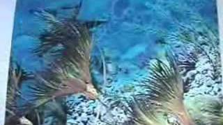 Introduction To Fossil Crinoids Part 1