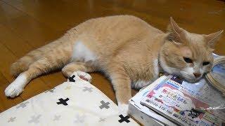 わが家の想い出を動画日記として残しています。♀猫こむぎ&♂猫だいずは...