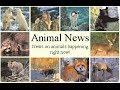 Animal News: China Outlaws Eating Endangered Animals