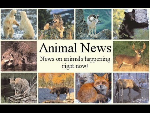 Image result for animal news