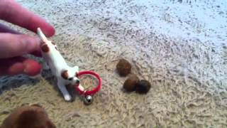 Good Dog, Bad Dog, WILD Dog (Ep. 2)