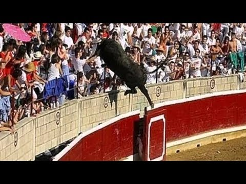 Bulls Jumping into Crowds of People Compilation (Possibly Funny)