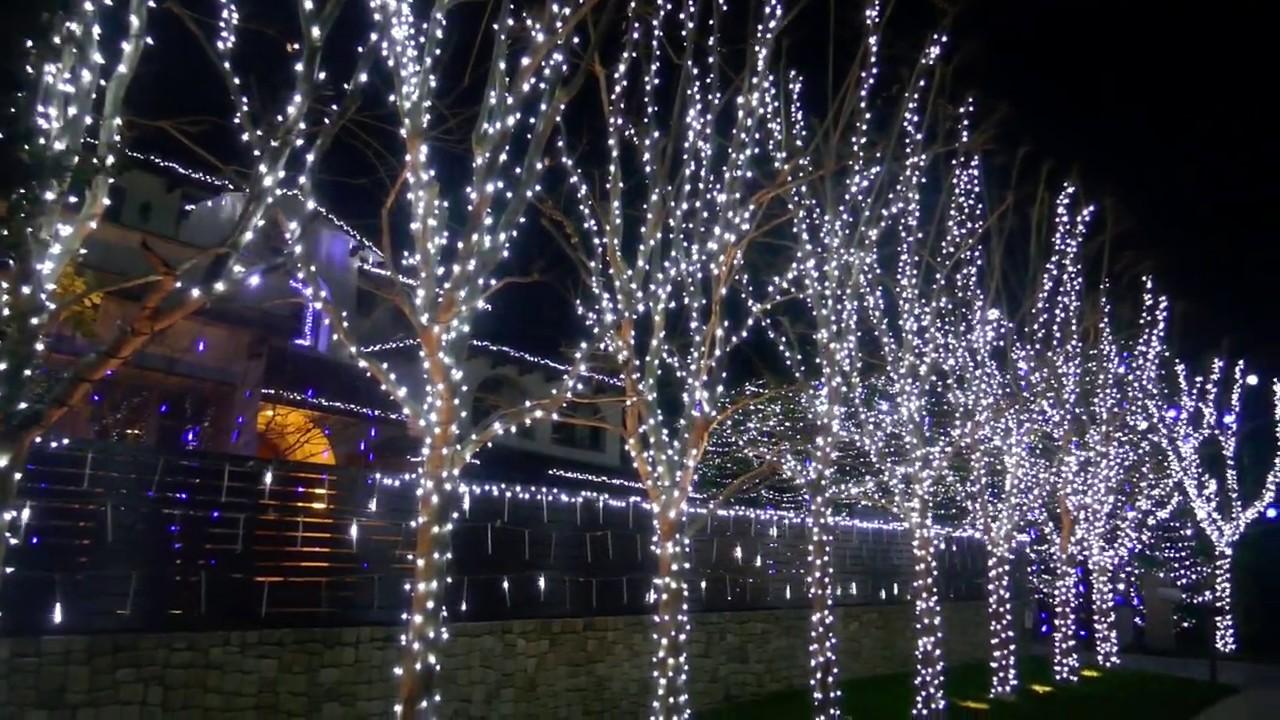 Beverly Hills Christmas Tree Lighting 2020 Christmas Lights Trees Beverly Hills California LA 1 5 2020