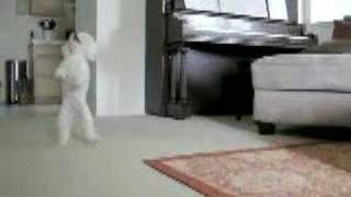 Best Toy Poodle Tricks!!!