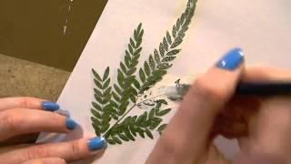 21 Ирина Колобова Оттиски растений