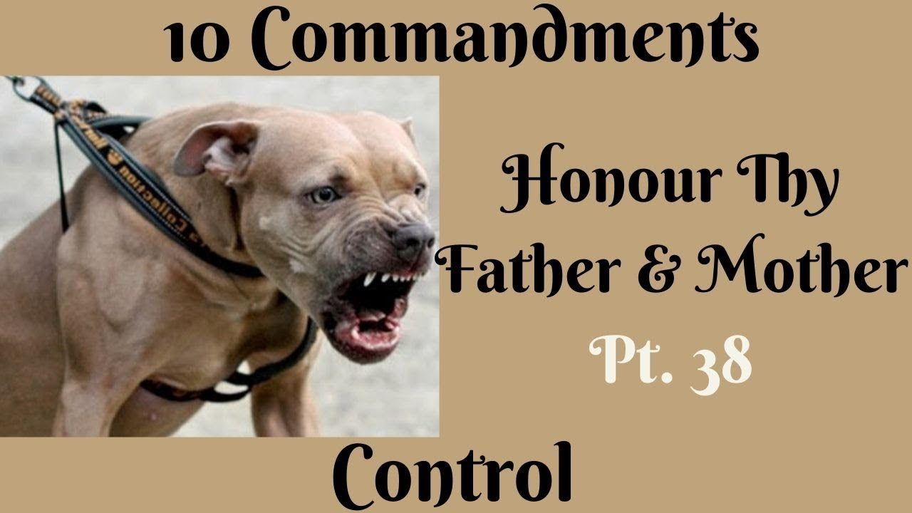 TEN COMMANDMENTS: HONOUR THY FATHER AND THY MOTHER PT. 38 (CONTROL)