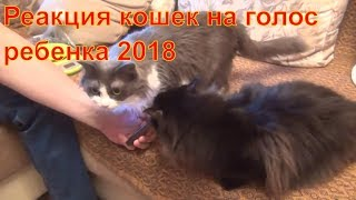 Реакция кошек на голос ребенка 2018 Реакция кота на голос ребенка 2018
