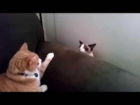 0 2 gatos se vendo pela primeira vez