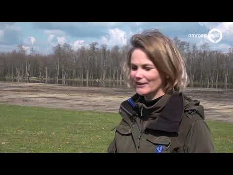 Kraanvogels in Korenburgerveen: