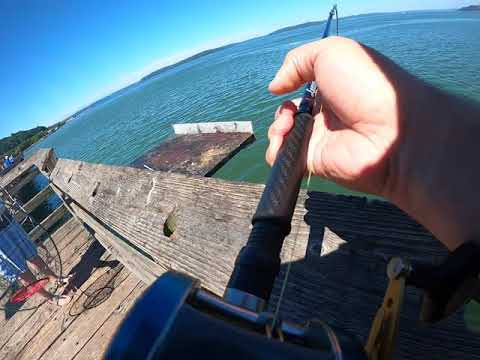 Puget Sound Pier Fishing For Salmon.