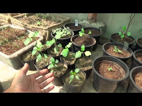 Vegetables Garden Overview Winter Good To Grow Urdu Hindi Kitchen Gardening