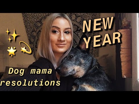 My Cattle Dog's New Year Resolutions!