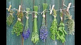 Обзор  семян пряно ароматических трав. Почвопокровники . Момордика.Что за интересное растение