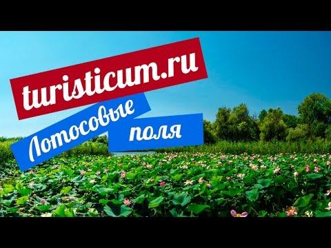 Лотосовые поля - Астрахань.