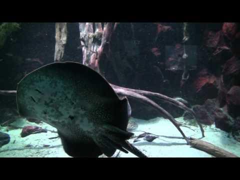 Artis aquarium