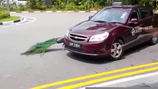 Животные атакуют людей!