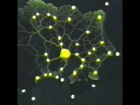 Slime mold form a map of the Tokyo-area railway system