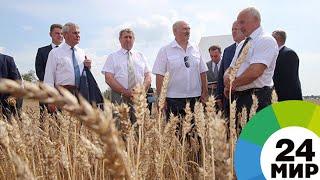 видео Новости: Зерно