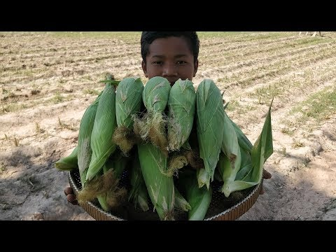 Easy Way to Cook Fresh Sweet Corn / Kdeb Corn Farm