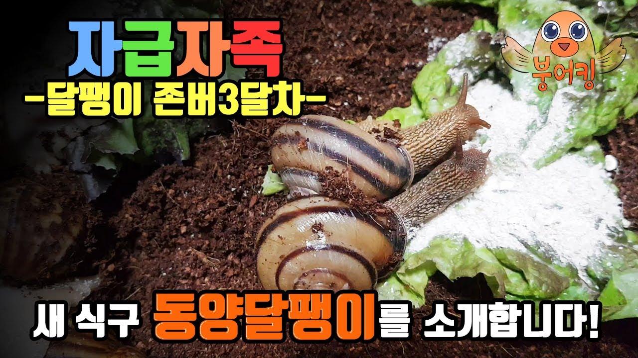 새 식구 동양달팽이를 소개합니다! (식용달팽이 존버 3달차 근황)