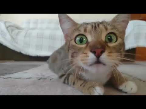 "Cute and Funny Animal Videos Compilation , Animals on Vine ""cute moment of the Animal"" Soo Cute! #20"
