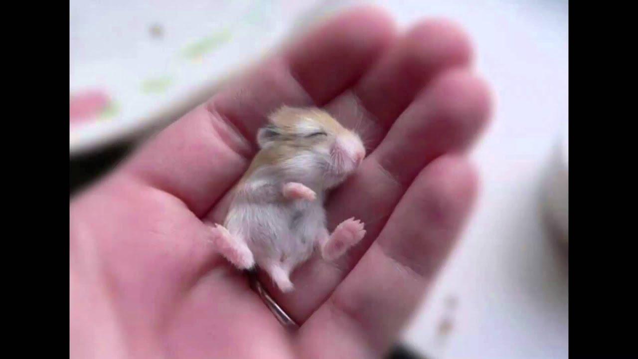 Les animaux les plus mignons du monde youtube - Animal mignon ...