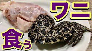【閲覧注意】ゲテモノレビュー!ワニの肉にかぶりつく‼︎意外なお味にリーダービックリ!?