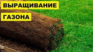выращивание и укладка газона как бизнес идея