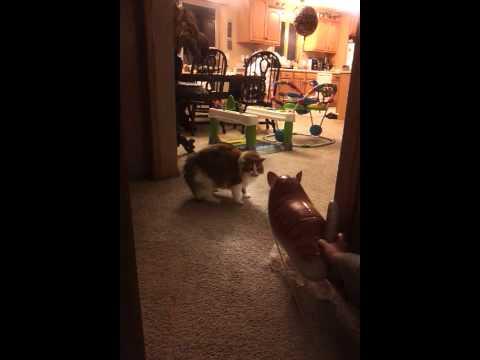 Cat vs. Cat balloon