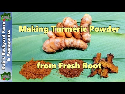 How to Make Turmeric Powder from Fresh Home Grown Root.