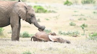 Playful Elephant Tickles Baby With His Trunk