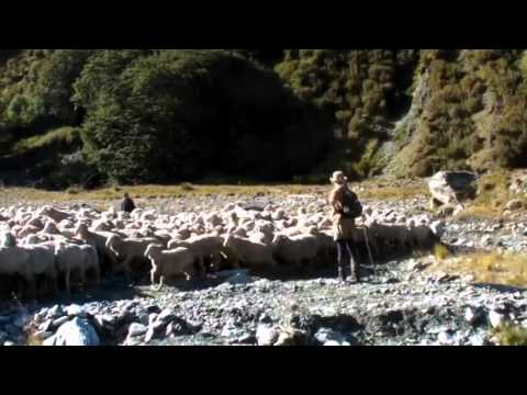 A day in a high country sheep station in New Zealand ニュージーランドでの羊の放牧の一日体験