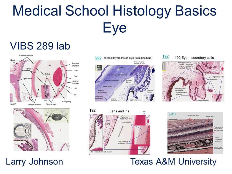 Medical School Histology Basics - Eye - YouTube
