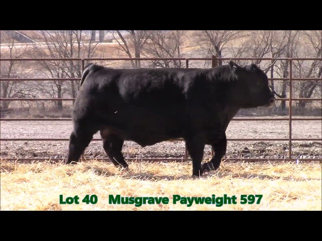 Musgrave Angus Lot 40