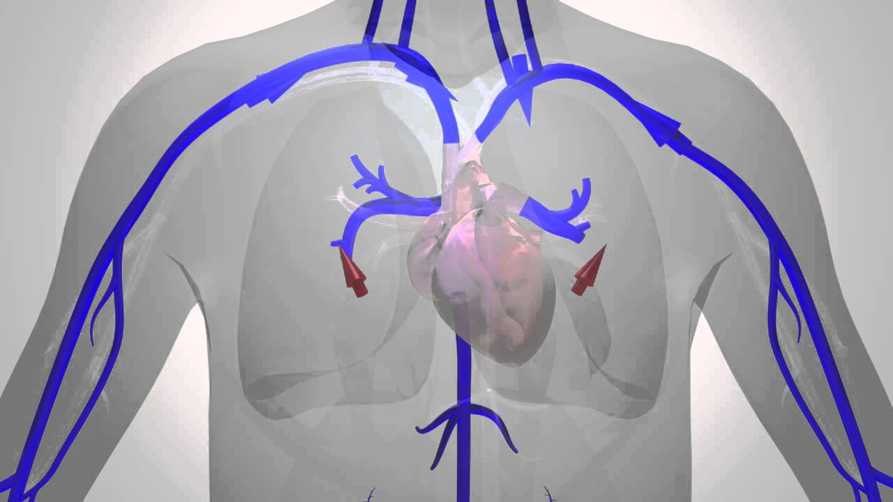 Blood Flow In The Human Body Youtube