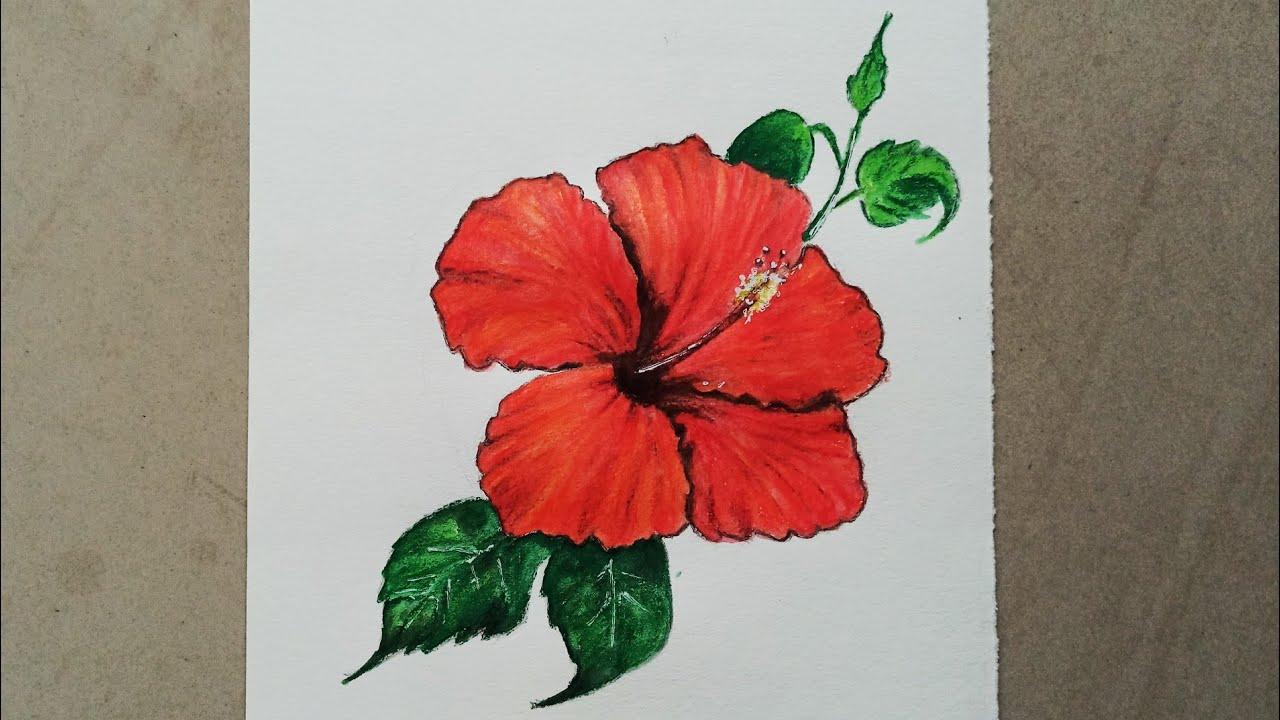 Hibiscus flower drawing tutorial easy