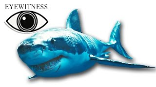 EYEWITNESS | Shark