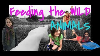 Trying To Feed WILD ANIMALS!! FAIL