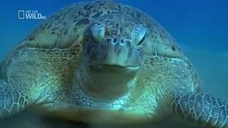David Attenborough Desert Seas Full Documentary HD